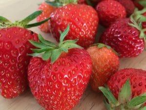 楽しいイチゴ栽培を始めよう!