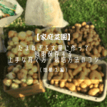 たまねぎの栽培方法